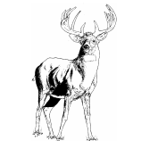 Kings Somborne Stag Logo